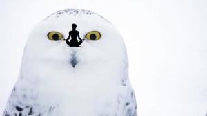 white owl final